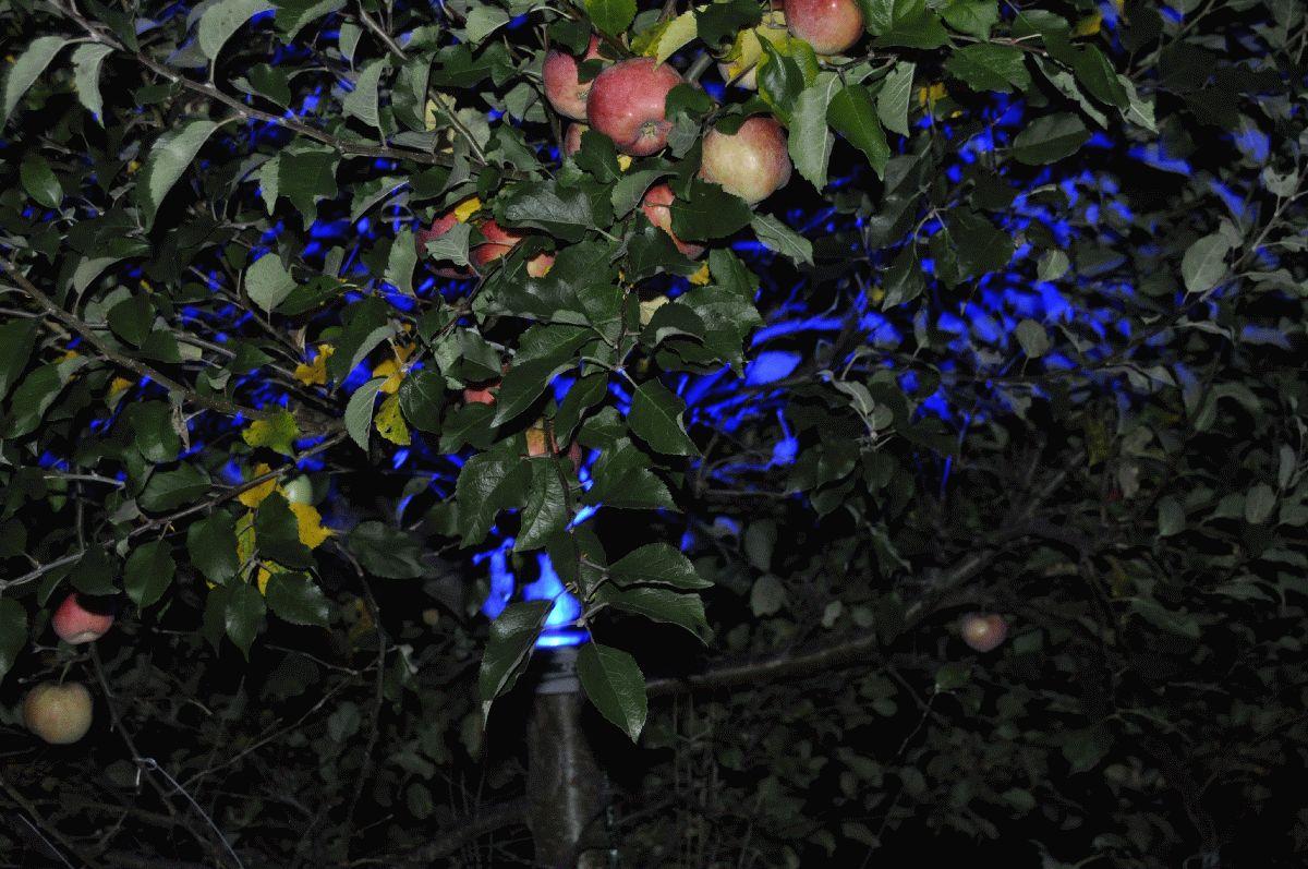0_zu_2.3-1_äpfel_blue_in_der_nacht