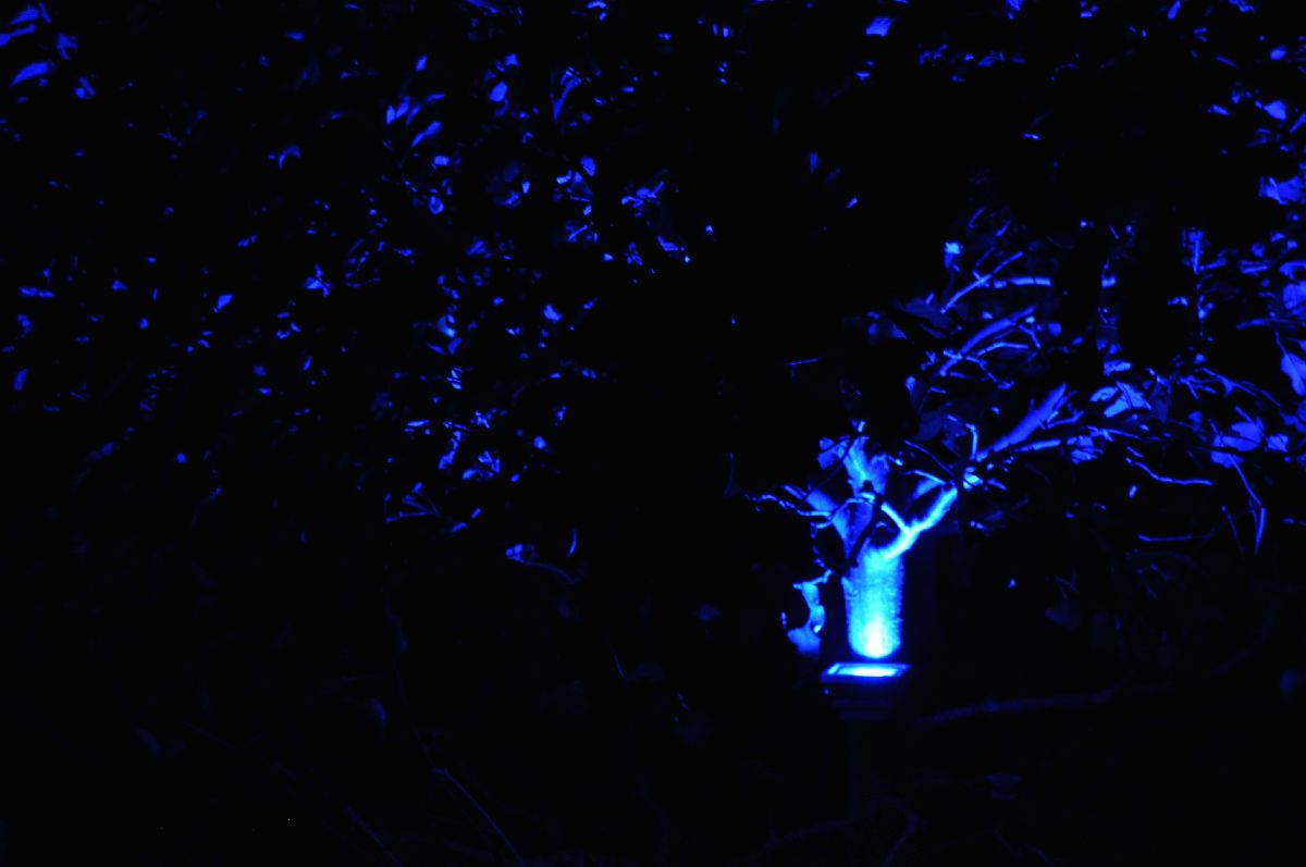 0_zu_3.4-1_blauer_baum_nachts